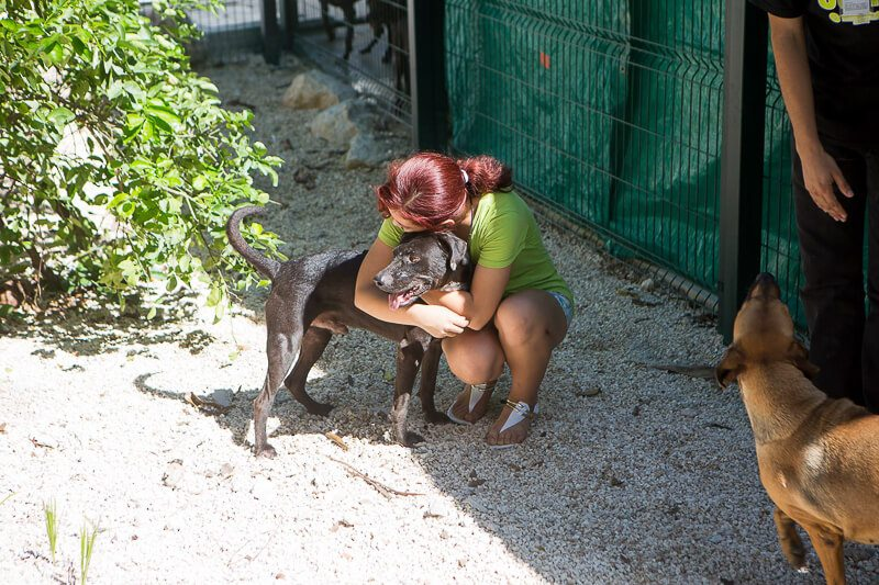 Animal Rescue Shelters in the Riviera Maya